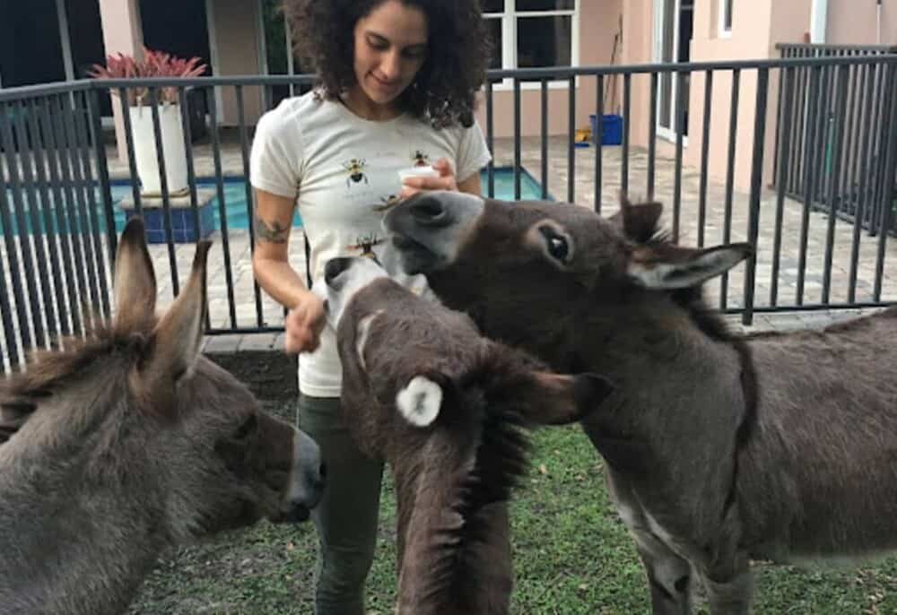 donkeys express emotions with their body language (1)
