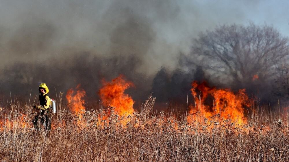 fire lines keep brush fires from farm animals (1)