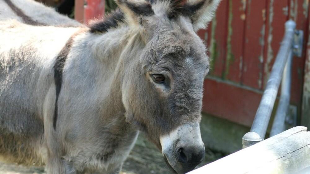 Donkey costs vary by region (1)