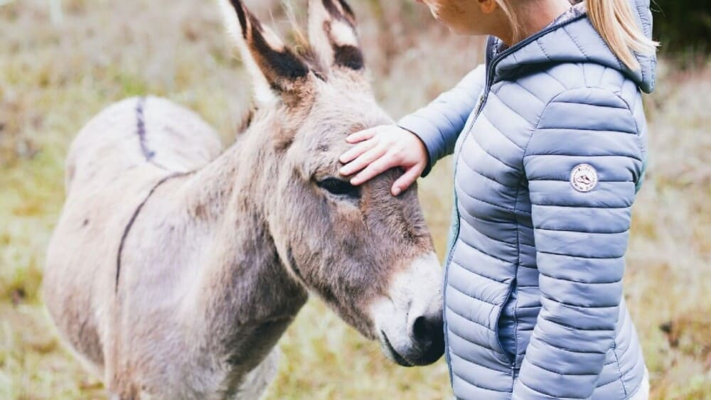 Donkeys follow owners they love