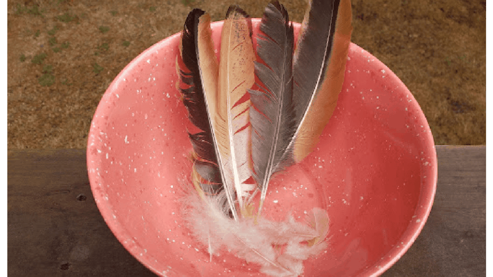 Feathers from a molting chicken (1)