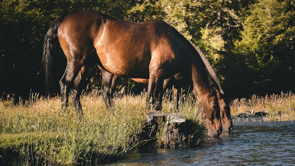 Horses need 5-10 gallons of water each day (1)