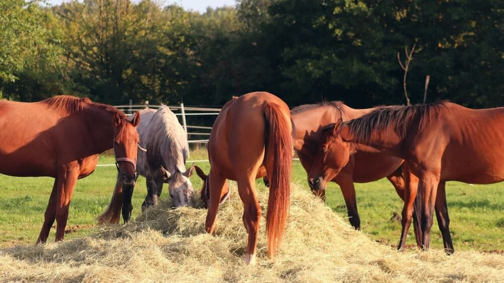 Horses often resource guard instead of actual jealousy (1)
