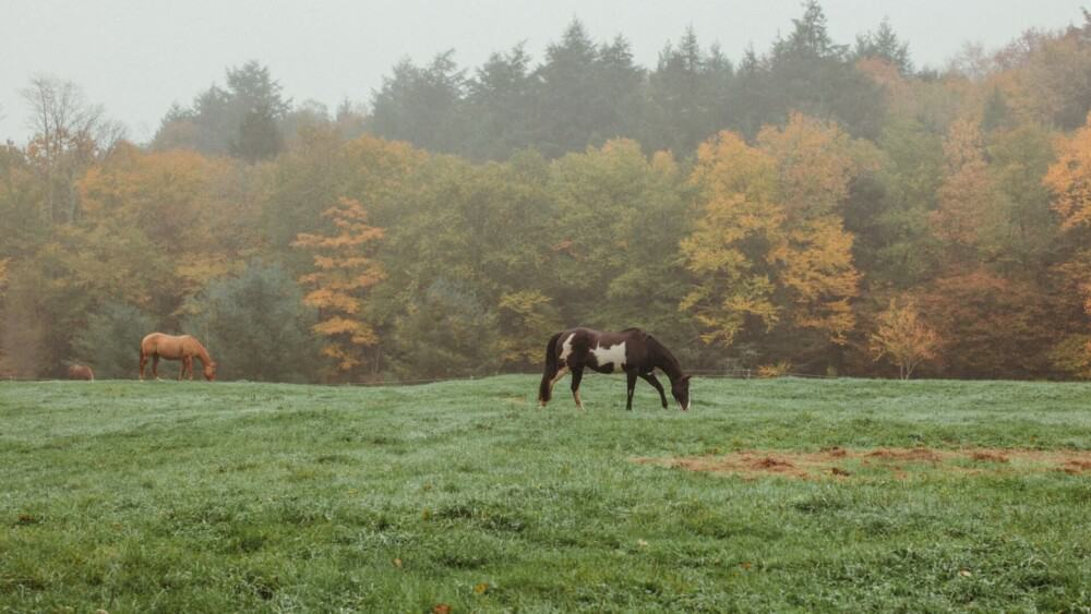 Most horses stay outside in the rain (1)