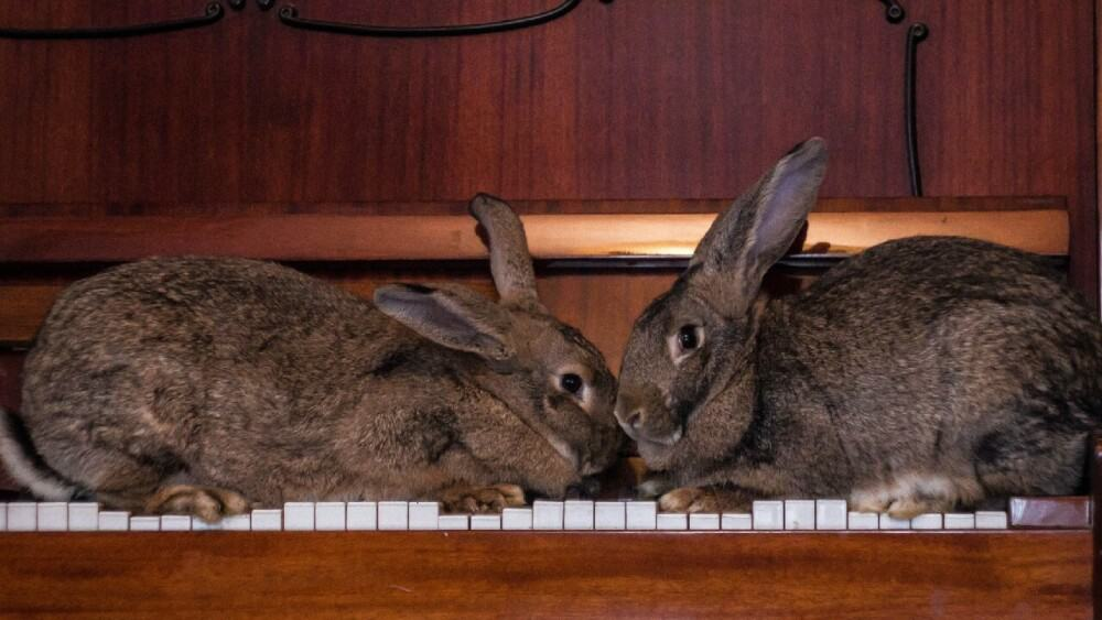 Rabbits die for a few common reasons (1)