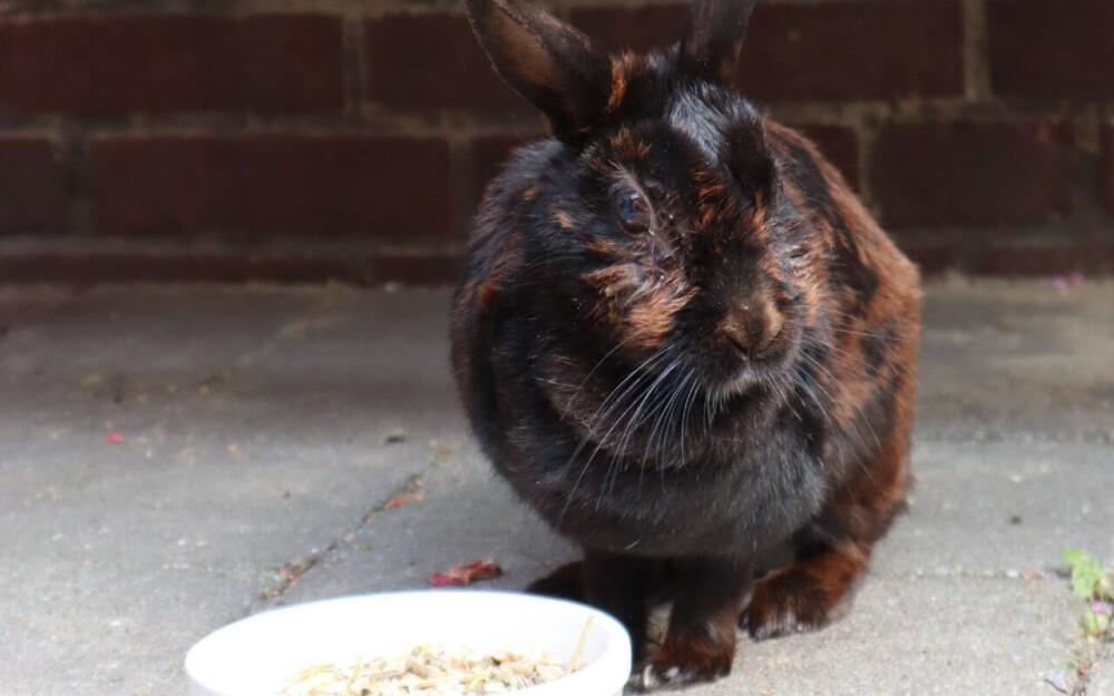Reasons bunnies die (1)