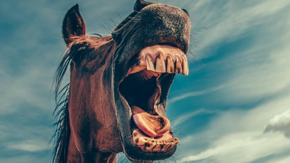 Stop horse biting (1)