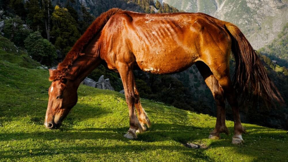 Sweat is normal for horses who have been working