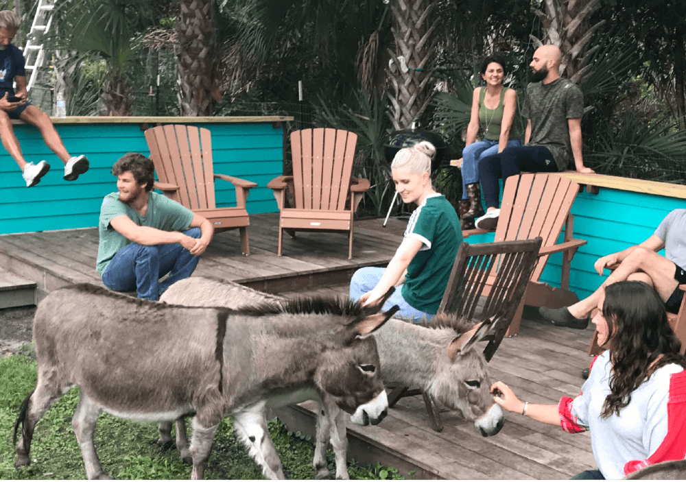 When donkeys love their people, they want to be by them