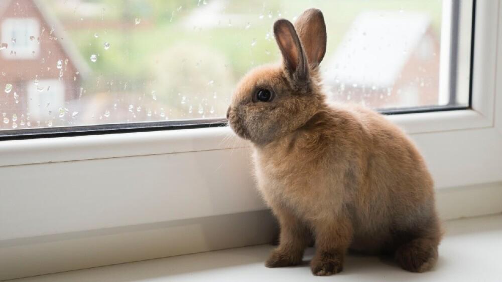 Why did my rabbit die (1)