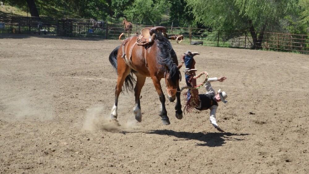 calm wild horse behavior (1)