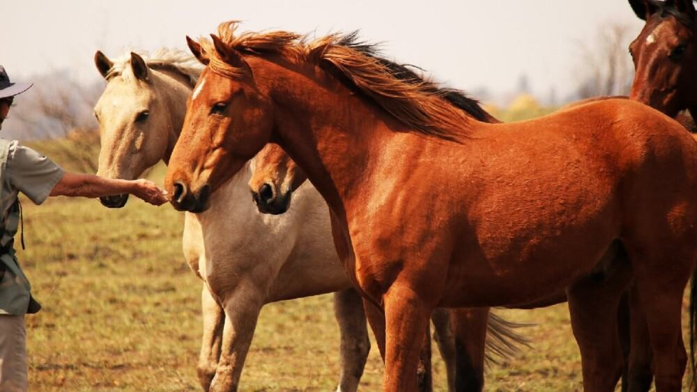 horse jealousy is usually resource guarding (1)