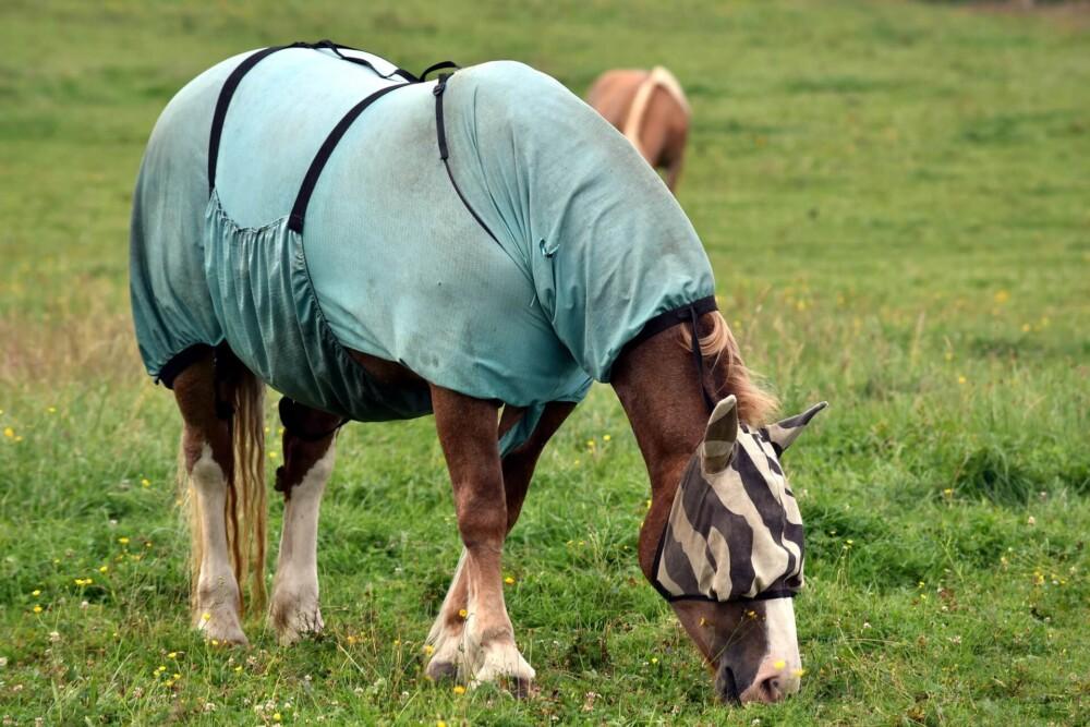 horses can handle rain, but blankets can incubate rain rot