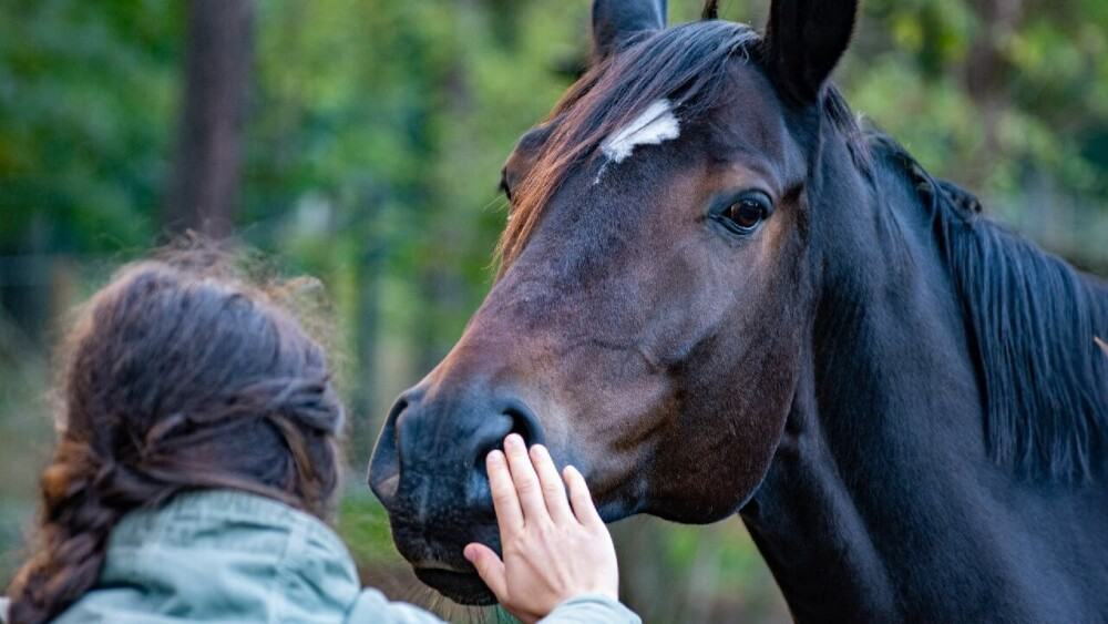 horses signal trust when they willingly touch you with their mouth (1)