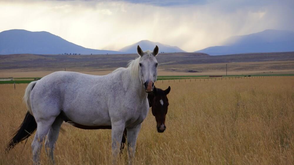 mud fever is one danger of rain for horses (1)